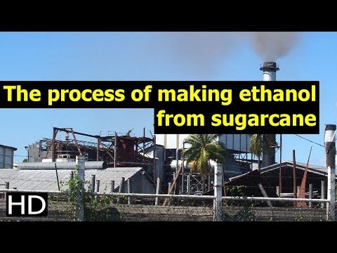 The Process Of Making Ethanol From Sugarcane