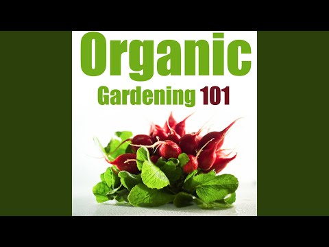 Organic Gardening for Beginners – Everything You Need to Know