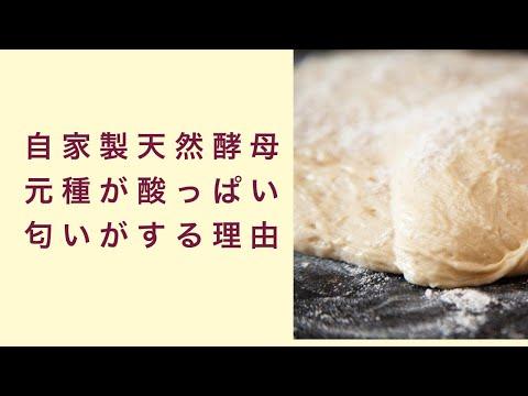 【自家製天然酵母】元種が酸っぱい匂いがする場合はどんな時か? フルーツ酵母 自家製天然酵母 パン教室 教室開業 大阪 奈良 東京 福岡 名古屋