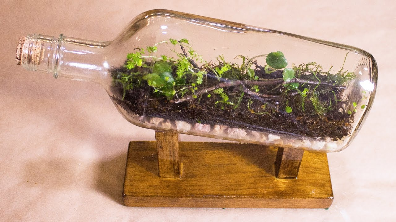 pop bottle terrarium bean plant experiment How to make a biodome for a science fair project by kay tang updated april 25, 2017 a biodome is a contained sustainable environment with enough resources for.
