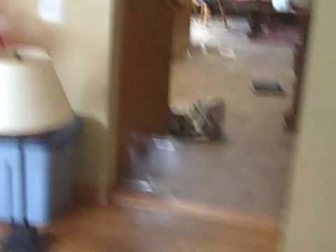 dog runs into saran wrap