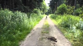 Mit Hund allein im Wald 6
