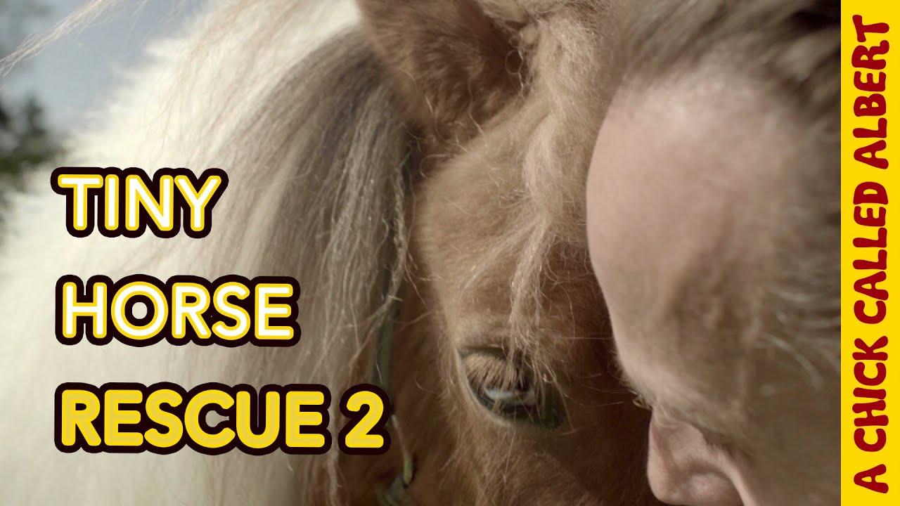 Mini Horses rescued