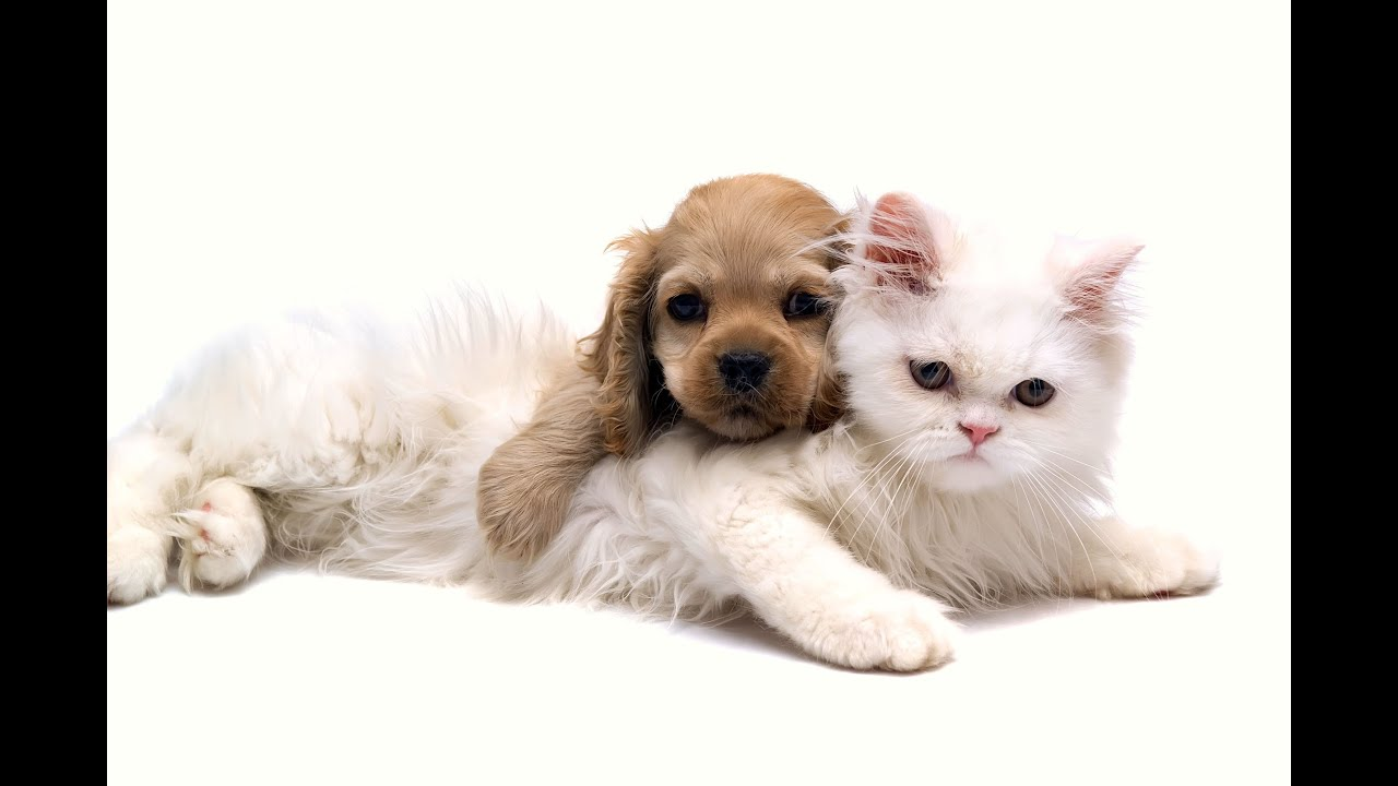 the cheerful and depressing tactics in the cute animal videos Earth is filled with thousands different animal species some are good, some are bad and some are cute although cuteness doesn't always mean harmlessness, read 10 cute, beautiful but surprisingly dangerous animals.