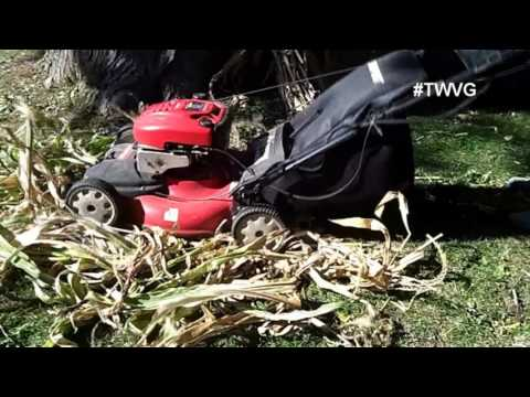 Harvesting Leeks, Container Bugs, and more! -  The Wisconsin Vegetable Gardener