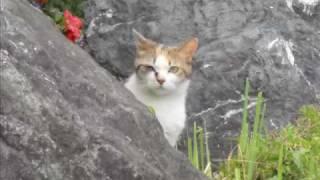2010.6.5 ボイレコ オリンパスV-51 写真は2010.6.13通りすがりの猫と常...