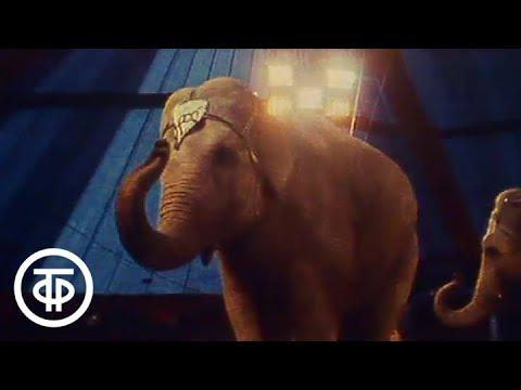 Вопрос: Почему слоны такие толстокожие?