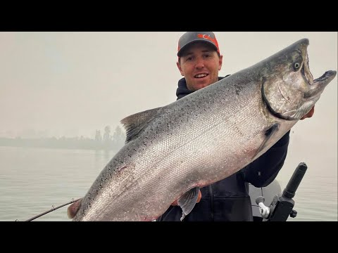 Small River SALMON FISHING Tips, Tricks, & Rigs!