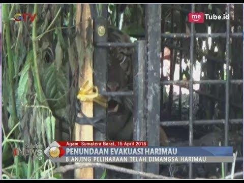 Petugas Konservasi Tunda Evakuasi Harimau di Agam, Aceh - BIP 16/04