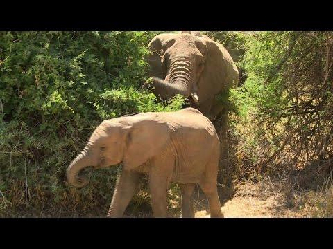Kenya: observer les éléphants via Google Street View