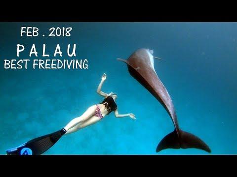 팔라우 프리다이빙 여행 PALAU FREEDIVING TRAVEL VIDEOS