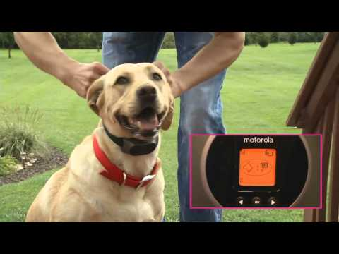 Motorola Wireless Dog Fence