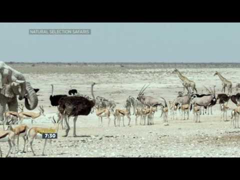 Tuesday Travel - Namibia