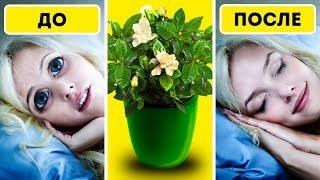 6 Растений Для Спальни, Которые Улучшат Ваш Сон
