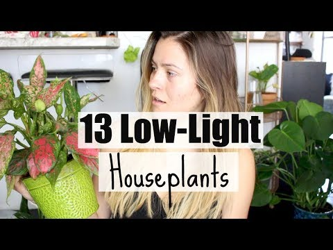 13 Low-Light Houseplants! | Plants That Love Low-Light