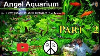 Kolathur Angel Aquarium Part 2 கொளத்தூர்