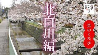 京のこたび 北白川編 / 京都いいとこ動画