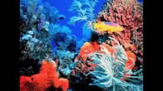 Коралы и рифы
