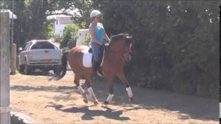 Helsington Lucky Star - 10 Year Old - Bay - Mare