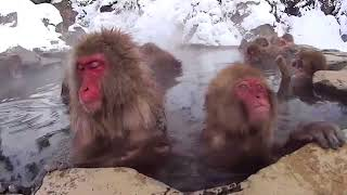 видео Термальные горячие источники в Краснодарком