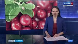Ягоды Карелии Репортаж \