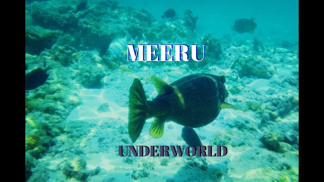 Meeru Island Resort, The Maldives - underwater life! Small coral reefs full of life and beauty!