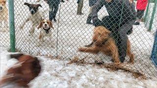 Много собак на площадке/разборки собак