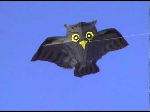 Hugo Kite by Flying wings Kites