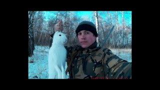 Охота на зайца беляка зимой