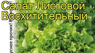 Салат листовой (Восхитительный). Краткий обзор, описание характеристик, где купить семена