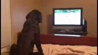 Ella/slick Pup Gater Watching Mom In Duck Dog Basics 2