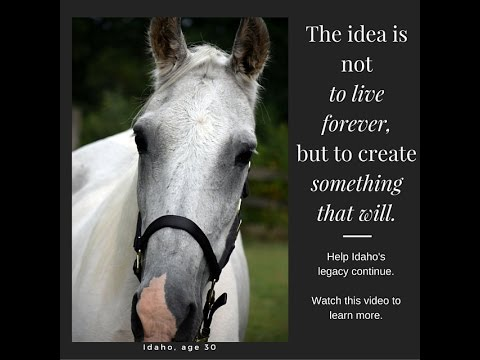 Idaho's Legacy for Stolen, Missing and Lost Horses