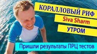 Утреней Риф Siva Sharm Сива Шарм Пришли результаты тестов