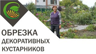 видео Летняя обрезка роз и декоративных кустарников