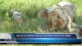9000 de lei amenda pentru detinere ilegala de lemne