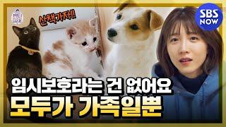[뷰티 앤 더 비스트] 요약 '천재 고양이 다홍이와 새로운 가족을 만난 반려동물들 이야기' / 'Beauty…