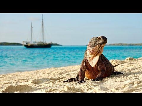 CRAZY IGUANA ISLAND IN THE BAHAMAS!