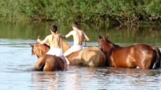 Cavalo Crioulo Banho refrescante Rio Negro, Aceguá RS