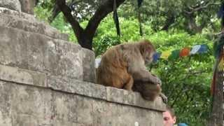 Voyage au Nepal - Swayambunath (Monkey Temple) - Kathmandu - Mandap Travels