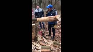 Незаконная вырубка леса г.Запорожье
