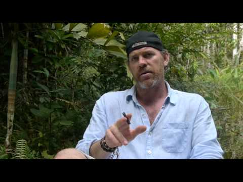 Review of 12-Day Ayahuasca Retreat – Treatment of Depression – Mark