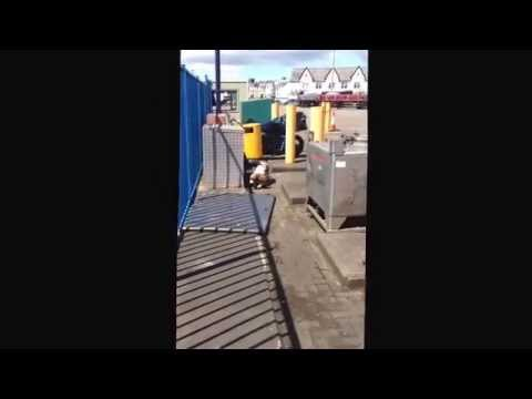 Jack Explo Searching Open Area at Sea Terminal, Douglas