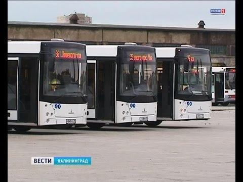 Какие автобусы выйдут на улицы Калининграда с 1 августа