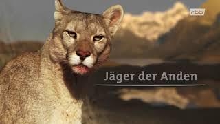 Jäger der Anden: Der Puma Doku (2012)