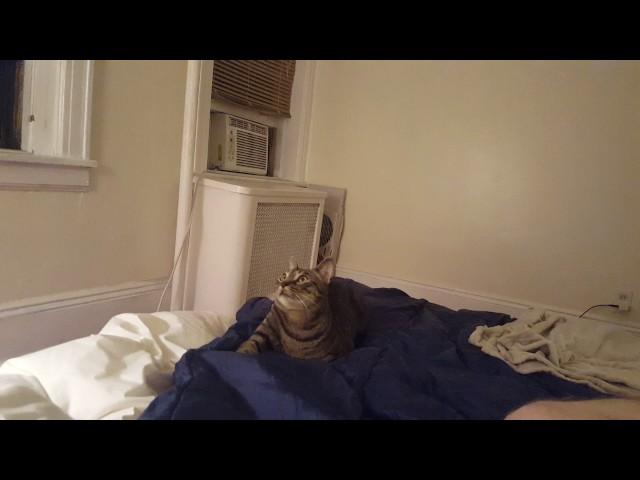 Cat Watching Flies