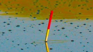 Рыбалка на УТРЕННЕЙ ЗОРЬКЕ на поплавок ЛОВЛЯ НА МАХОВУЮ УДОЧКУ карася