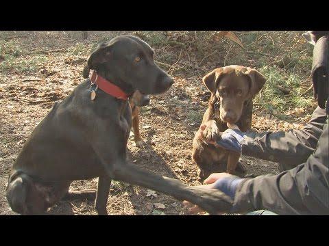 Hundefutter Test | Stiftung Warentest