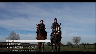 RIVERROCK BACKSTORY | RAGEESE X MARZERI COLT