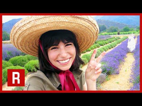 APPLEGATE VALLEY LAVENDER FARM | Oregon Trail