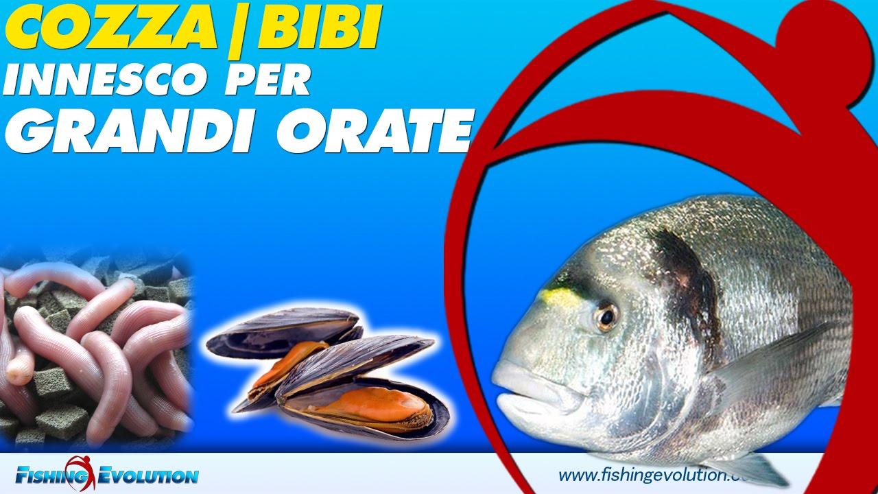 Innesco Combinato Cozza & Bibi Per Pescare